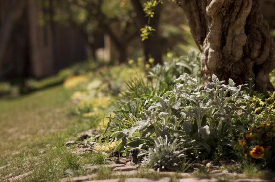Jardin_Enric Moran 2