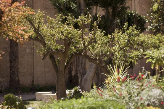 Jardin_Enric Moran 3